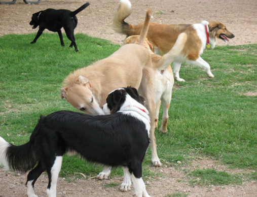 Dogs_in_park
