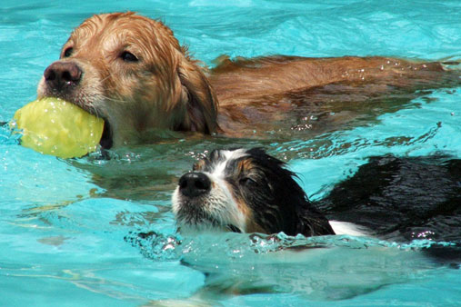 Local pups will have to wait until next year to get a chance to swim in the Prairie Village pool.