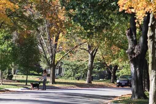 Leaves_Turning_Dog_Walk