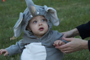 Actual elephant babies weigh about 120 pounds at birth. I'm guesstimating this li'l pachyderm impersonator clocked in at under 20.