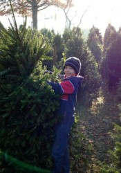 A Scout from Troop 199 at St. Michael's helps with Christmas tree sales Sunday.