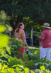 Garden_Party_Summer_Solstice_Prairie_Village