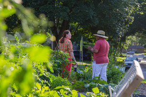 Gardeners checked out each other's plots at the annual Summer Solstice Garden Party at the Prairie Village community gardens at Harmon Park Friday.