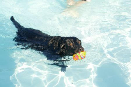 Tugboat was the most appropriately named dog in the pool Tuesday.