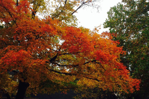 Fall colors along Mission Road in Roeland Park.