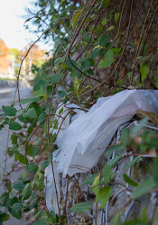 Prairie Village's Environmental Committee is exploring a potential ban on plastic bags intended to reduce litter and pile up in landfills.