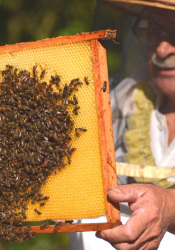 Beekeeping has seen an increase in interest in recent years.