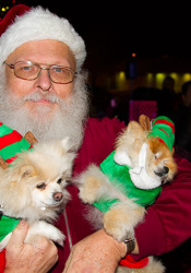Prairie Village resident Michael Kaminski with his dogs, Fancy and Annie, all in full holiday attire.