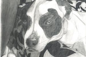 Cooper_Dog