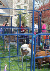 A petting zoo on site adds to the Easter excitement.