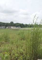 The weeds continue to grow on the vacant Gateway property. The city recently had its abatement contractor mow at the site.