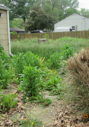 A photo of an overgrown Prairie Village backyard from Wes Jordan's presentation to the council earlier this month. Photo courtesy city of Prairie Village.