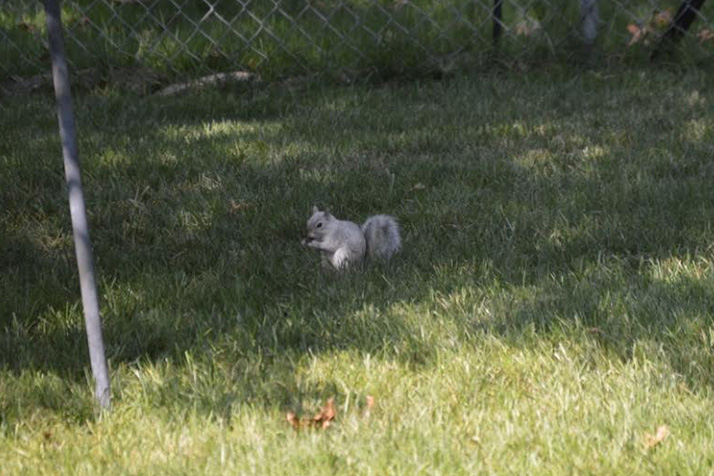 Squirrel but it s the whitest squirrel we ve ever seen he