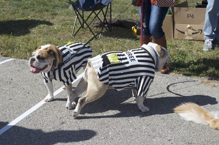 It is the season when you can't have too many Rufferees on duty.