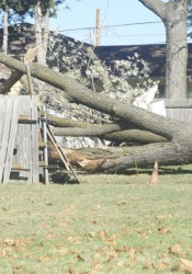 The large tree was being removed by family members.