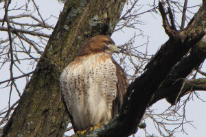 Big_Birds_Prety