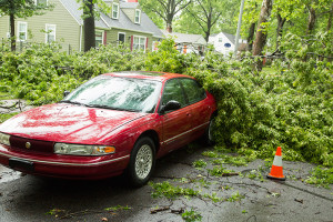 The top half of an oak tree on Village Drive in PV snapped off, part of it landing on top of a car parked in the street.
