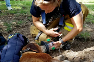 Overland Park firefighters tend to a dog rescued from an apartment fire in Merriam.