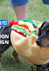 Who is going to bring you pictures of dachshunds in hot dog costumes if not us, people?