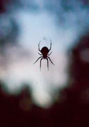 Spider_Morning