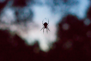 Spider_Morning