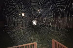 Spider_Wed