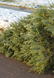 Christmas-Tree_Disposal