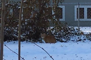 Bobcat_PV_Backyard