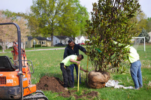 Workers were able to plant new trees in R Park to replace the culled ashes with the help of funds raised by a group of citizens.